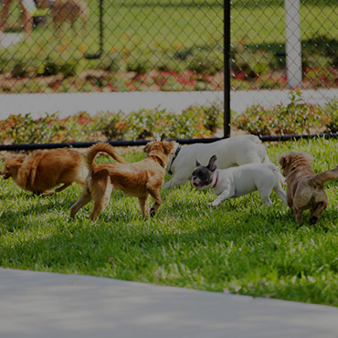 Large Dog Park at Sun Valley Apartments